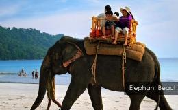Elephant-Beach-2