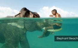 Elephant-Beach--3