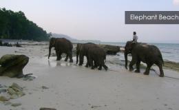 Elephant-Beach